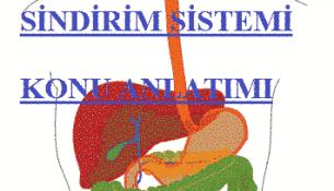 sindirim-sistemi-resmi_5