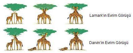 Lamarck- Darvin Görüşleri