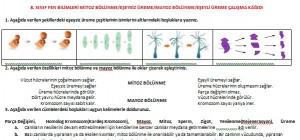 8. Sınıf Fen Bilimleri Çalışma Kağıtları