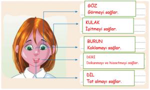 İpekyolu Yayınları 19. Sayfa Cevapları