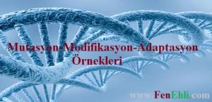 Mutasyon-Modifikasyon ve Adaptasyon