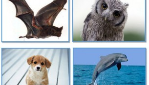 İnsan Kulağının İşitemediği Sesleri İşitebilen Hayvanlar