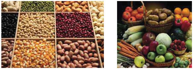 Tohumun Kullanım Alanları