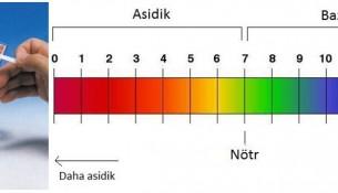 Turnusol Kağıdı ve pH ölçeği(skalası)