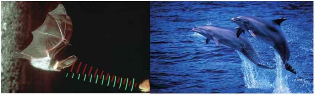 Yarasa ve Balinalar Sesin Yansımasını Kullanır