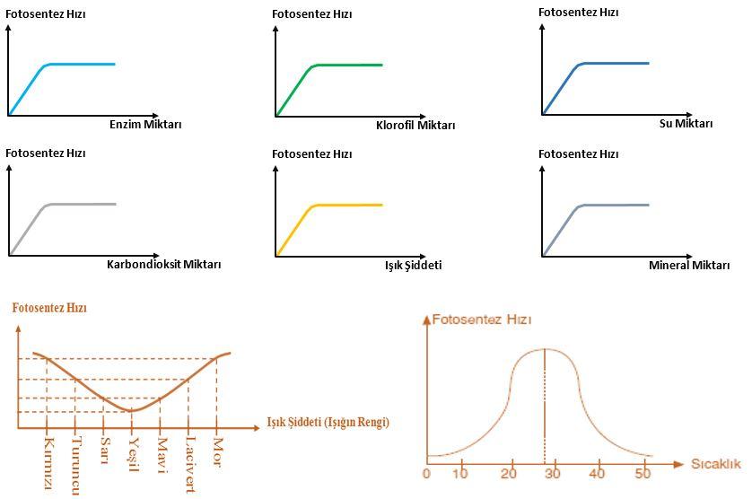Fotosentez Hızına Etki Eden Faktörler ve Grafikleri