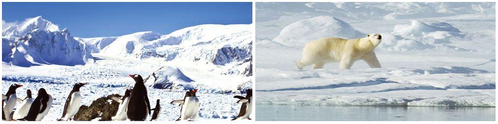 Kutup Ekosistemleri
