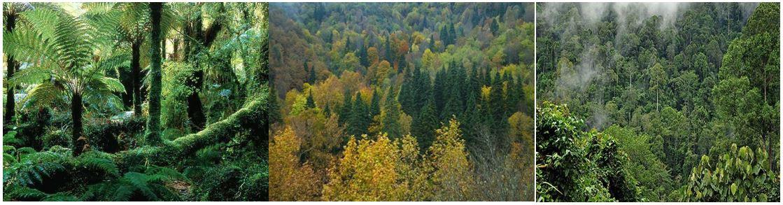 Orman Ekosistemleri