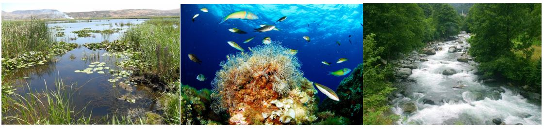 Su Ekosistemleri