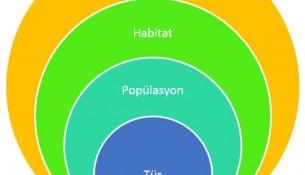 Tür-Popülasyon-Habitat-Ekosistem İlişkisi