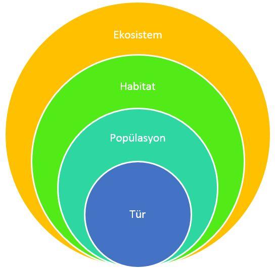 Ekosistemler Konu Anlatımı